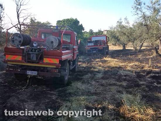Incendio di sterpaglie- Vigili del fuoco in azione