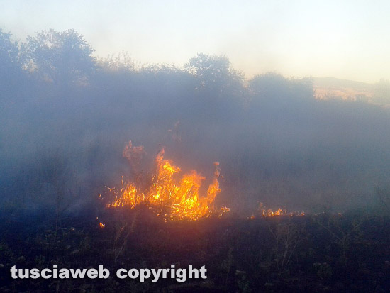 A Roma brucia la Pineta Sacchetti, a fuoco 30-50 ettari