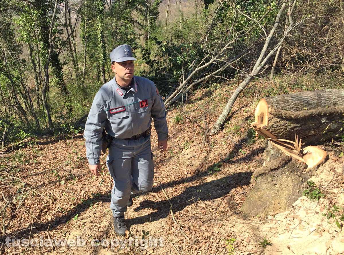 Travolto da un albero, muore boscaiolo | Aggiornamento