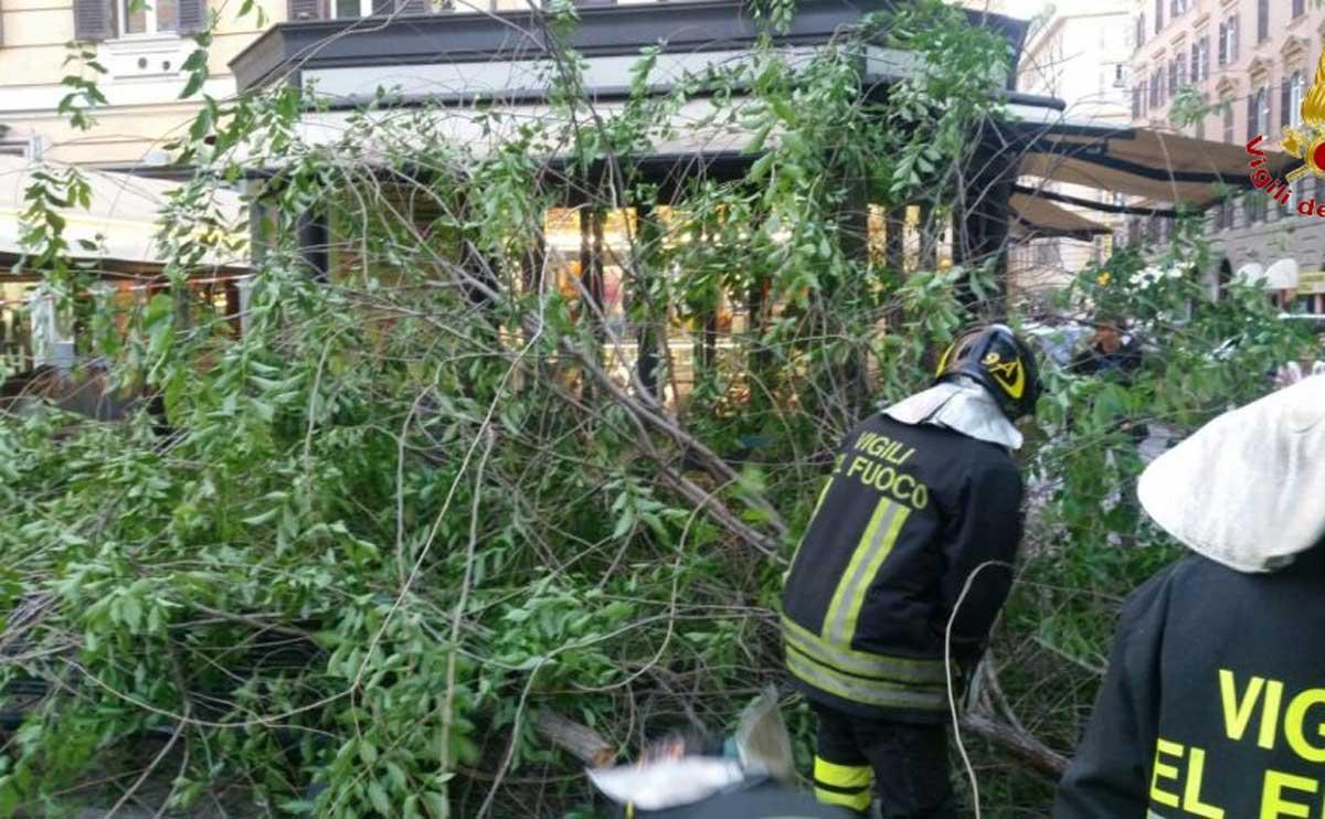 Roma, ramo albero cade su passante