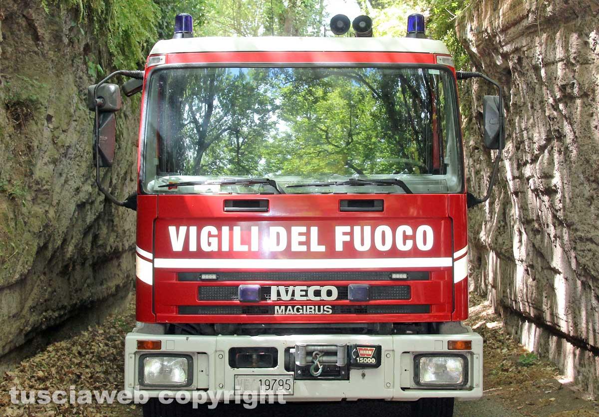 Roma, spunta un riccio tra le fiamme, salvato dai vigili del fuoco