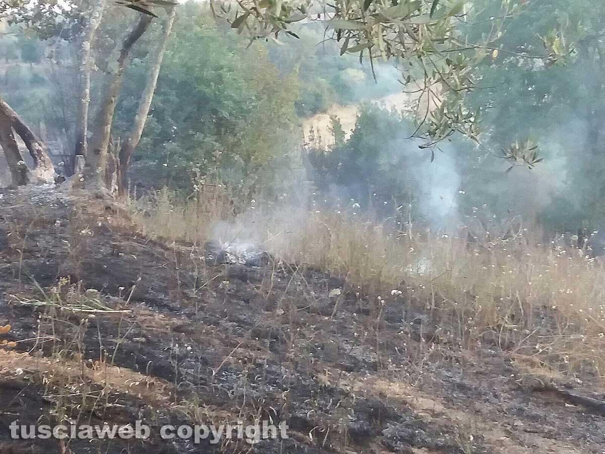 Viterbese, 4 ragazzi bloccati mentre bruciano bosco: